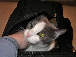 Cat Airline Travel