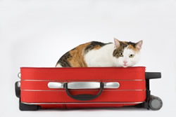 Pet Travel with your dog or cat