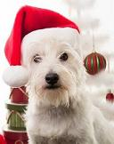 Holiday pet travel - tips for traveling with a pet during the holidays