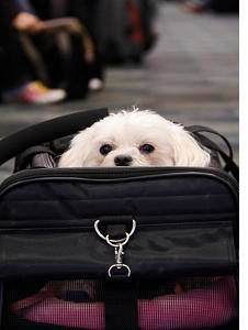 Airline pet travel tips for booking tickets for you and your pet