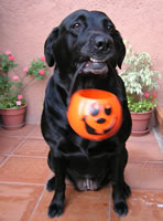 Pet Safety - Keeping your pet safe on Halloween