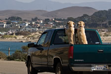 Pet Travel with a pet in a pickup truck