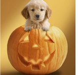 Keep your pet safe at Halloween