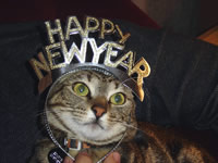 Pet safety at New Years Celebrations