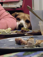 Pet health on Thanksgiving is essential to avoid discomfort