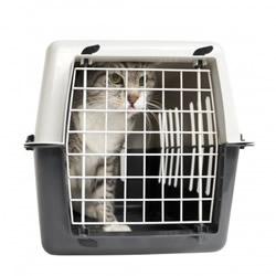 cat in cargo crate