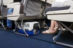 airline pet travel in cabin