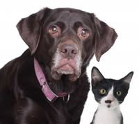 Older dog and cat