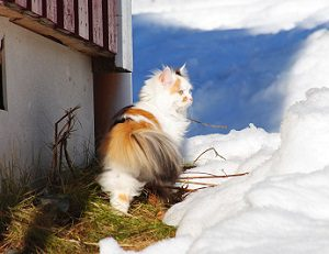 Protect your cat in winter