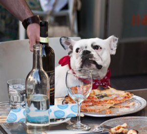 Dog Etiquette at the table