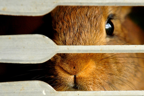 Pet Travel: Traveling by Air with Rabbits, Guinea Pigs, Rats