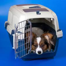 Dog in crate used by transporter