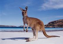Pet Travel to Australia