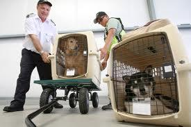 Pets in airline cargo  crates