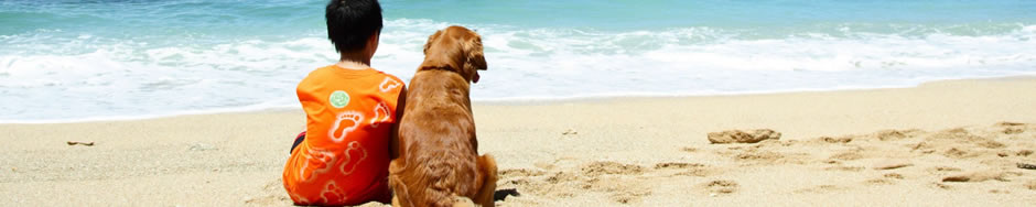 Best Dog Travel Tips,beach,holiday