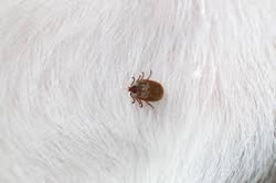 Ticks are not part of healthy pet travel.