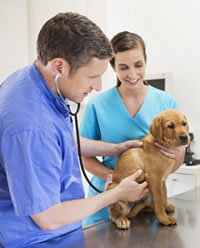 happy vet visits before traveling with your pet