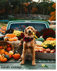 Safe Thanksgiving with your dog and cat