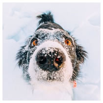 Protect your pet from low and high temperatures