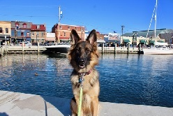 Best Dog Walks in Baltimore - Inner Harbor Trail