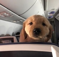 Image of: Certapet Photo Credit Typicalanimalscom Via Pinterest Airline Pet Policies On Flying With Emotional Support Pet Travel Emotional Support And Service Animals Airline Policies And How