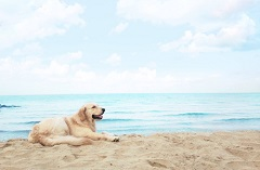 Pet Friendly My Khe Beach