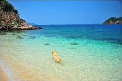 Pet Friendly Beaches Canary Islands
