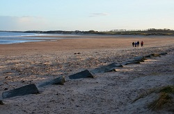 Dog Friendly Alnmouth Beach