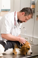 Vet Visit for your pet's health for travel