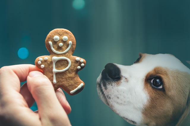 Dog-with-Christmas-cookie