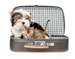 Traveling with Dog and Cat