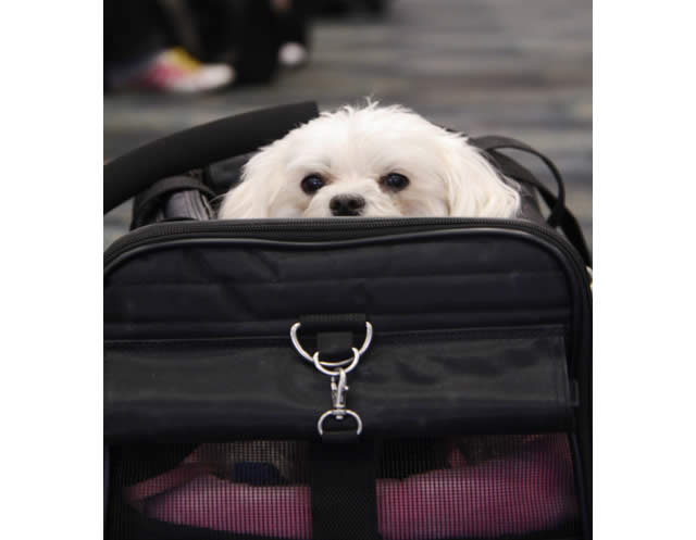 dog-in-airline-pet-carrier
