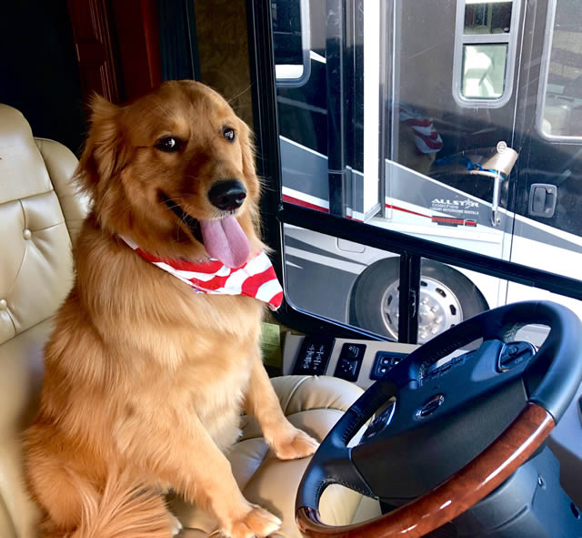 Dog in RV drivers seat
