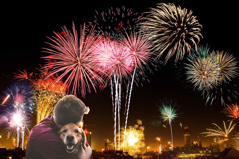 man and dog with fireworks