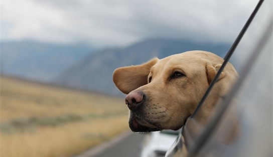 pet travel training for anxious dog