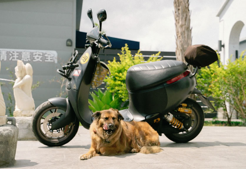 Dog with Motorcycle