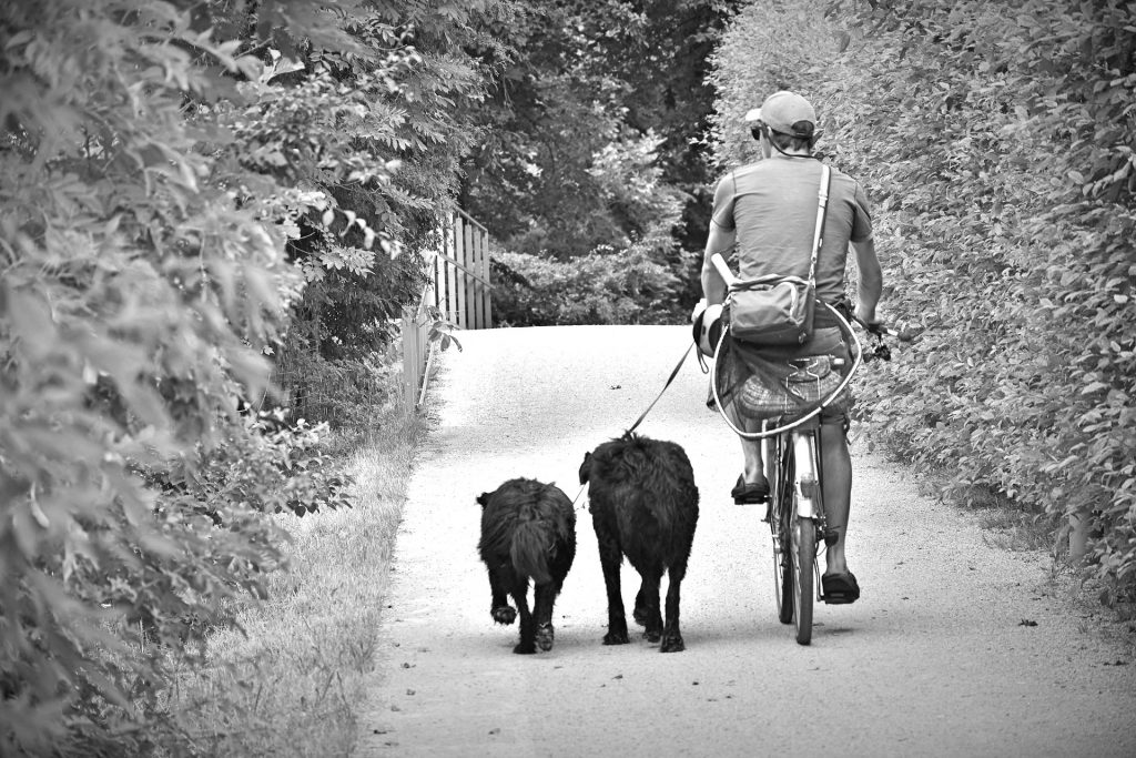Have fun with your dog bicycling at Bottle Lake Forest Park