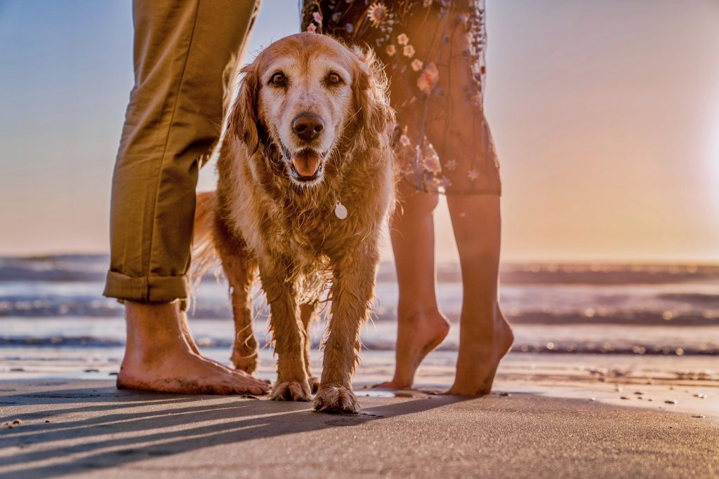 Have fun with your dog at a New Zealand beach