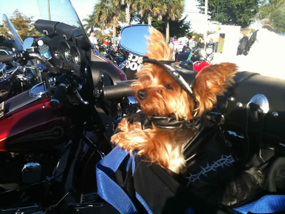 Dog in Motorcycle Carrier