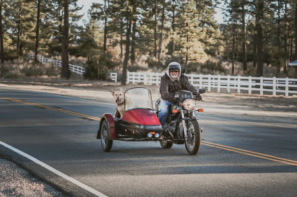 How to keep your dog safe on a motorcycle