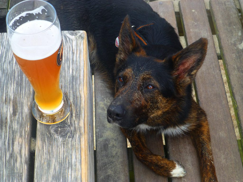 Have fun with your dog at Rogue and Vagabond Cafe