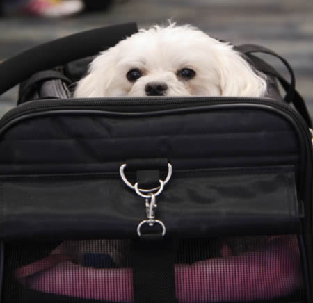 Dog in airline carrier