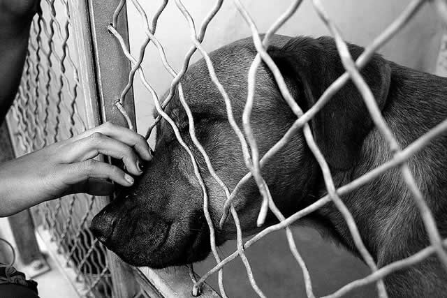 Adopt a dog to support your local animal shelter
