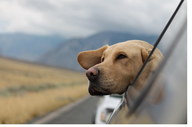 Travel with a dog in the car