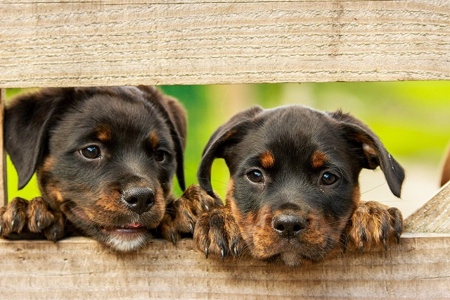Dogs from High Risk Rabies Countries banned from US